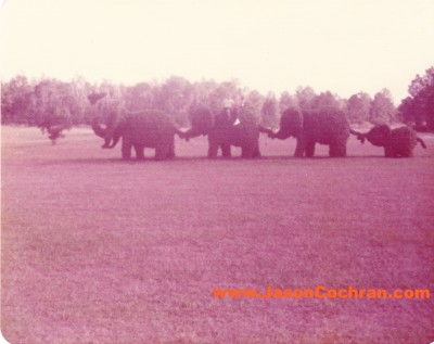 Walt Disney World was once famous for its elaborate topiaries. This would have been located outside the park near Tomorrowland. Mid-1970s.